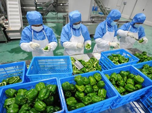 蔬菜切配加工
